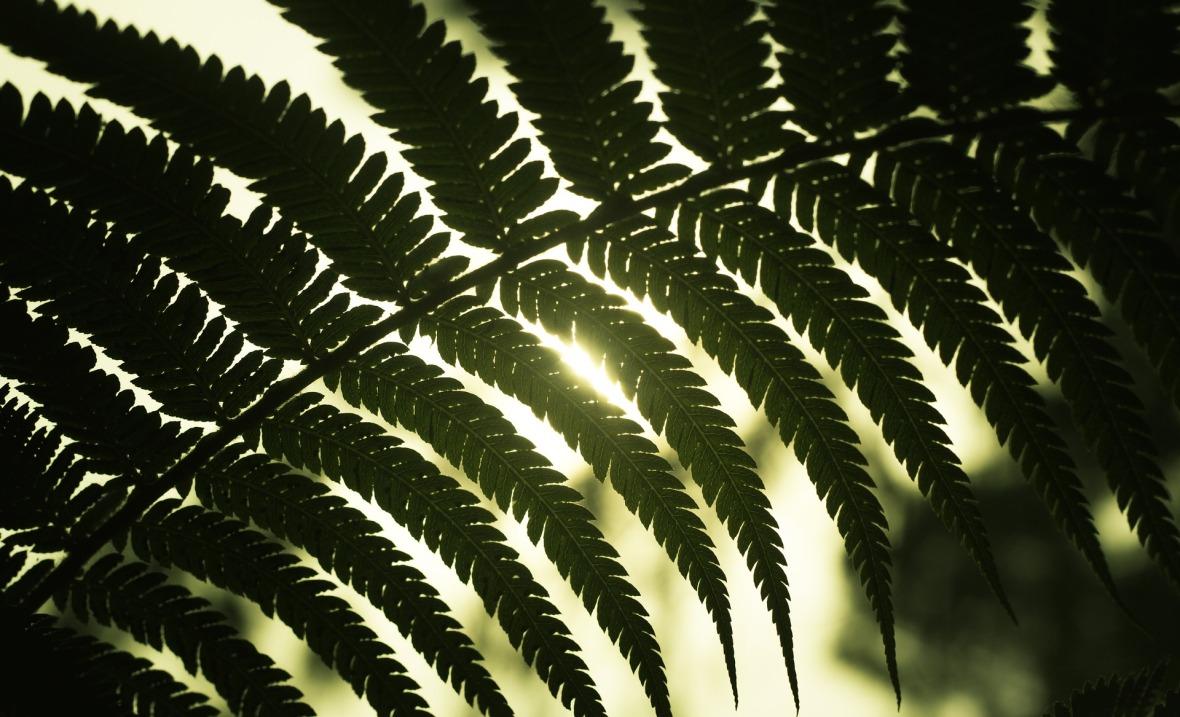 leaves-1360216_1920
